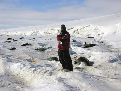 Scientist with Weddell seals