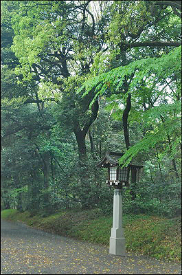 Meiji Shrine - Lantern near gate